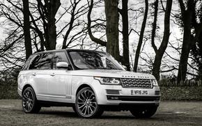 Обои ленд ровер, рендж ровер, Land Rover, Range Rover, спорт, Sport
