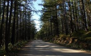 Картинка дорога, лес, солнце, свет, Сахалин