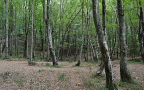 Картинка лес, деревья, начало осени