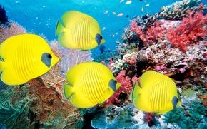 Картинка море, кораллы, рыбы, подводный мир, рыбки