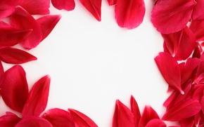 Картинка цветы, рамка, Лепестки