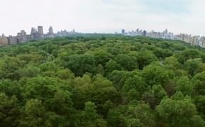 Обои деревья, парк, город