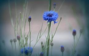 Картинка цветок, макро, туман, растение, луг
