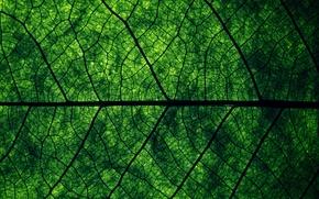 Картинка зелень, макро, природа, лист, структура, текстуры, жилки, macro, leaf