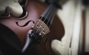 Картинка скрипка, струны, инструмент