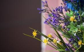 Картинка макро, цветы, синий, желтый, букет, коричневый