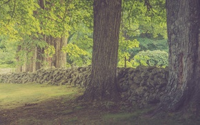 Картинка trees, sunlight, shadow, stone fence