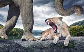 Картинка слон, львица, рык