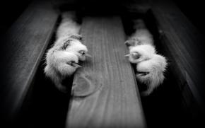 Картинка животные, кошки, лапы, черно-белые