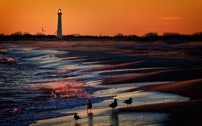 Картинка море, закат, птицы, маяк, берг