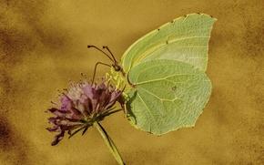 Картинка цветок, природа, стиль, фон, бабочка