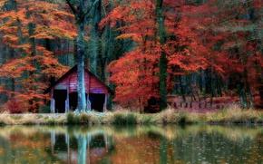 Картинка осень, лес, вода, деревья, природа, отражение, домик