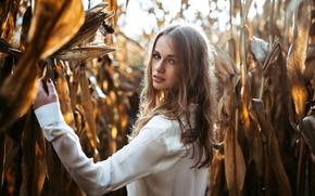 Картинка взгляд, девушка, кукуруза