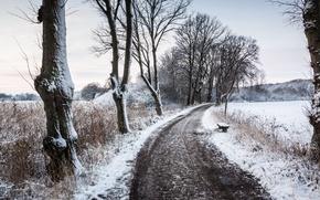 Обои зима, скамья, дорога