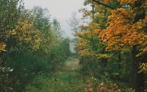 Картинка grass, autumn, leaves, fog, way, pathway, autumn colors, countryside, path, mist, fall, foliage, cloudy, woodland, …