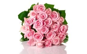 Картинка отражение, розы, бутоны
