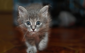 Картинка глаза, взгляд, фон, котёнок, смотрит