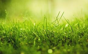 Картинка зелень, трава, капли, макро, роса, дождь, солнечный