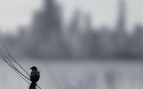 Картинка фон, птица, Melancholy
