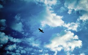 Картинка облака, птица, Небо, чайка
