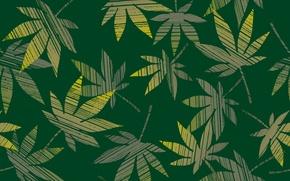 Обои конопля, зеленый, листья