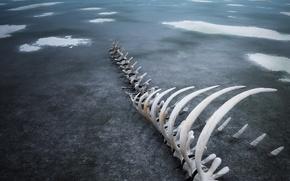Картинка лед, 154, кости, скелет