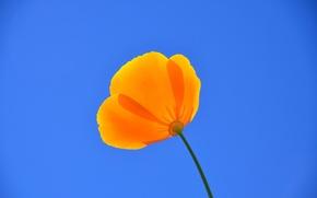 Картинка flower, sky, blue