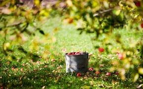 Обои лето, солнце, яблоки, урожай, ведро, лужайка