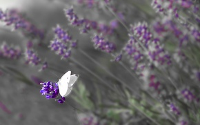 Картинка поле, цветы, бабочка, крылья, луг, насекомое