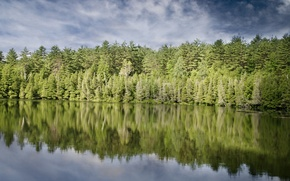 Картинка лес, берег, берег озера
