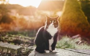 Картинка кошка, глаза, кот, усы, взгляд, черно-белый, сидит