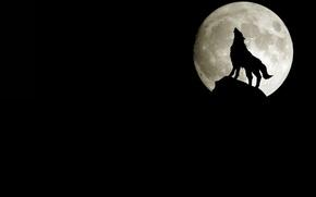 Картинка скала, луна, волк, силуэт, воет