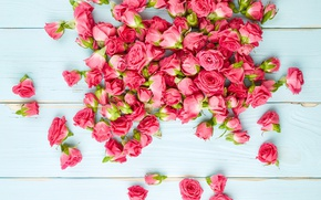 Картинка доски, розы, Pink, Roses, background, color