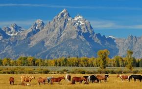 Картинка табун, горы, небо, лошади, осень, пейзаж