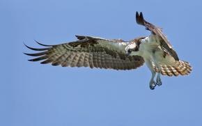Картинка небо, птица, орёл