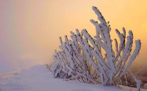 Картинка зима, небо, снег, пейзаж, природа, white, sky, nature, sunset, beautiful, winter, snow, cool, nice