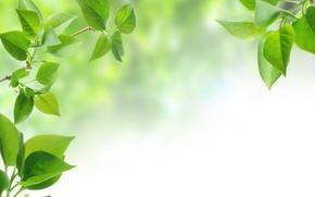 Обои ветка, leaf, фон, leaves, tree, листья, зеленые листья, листок, дерево, background, green leaves, branch