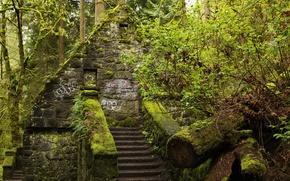 Обои зелень, лес, деревья, дом, парк, мох, лестница, ступеньки, США, кусты, Oregon, Portland, Forest Park