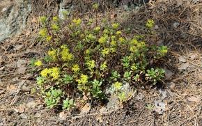 Картинка солнце, желтый, земля, Лес, Лето, коричневый, почва, Желтые цветы