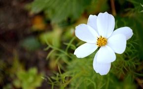 Картинка белый, цветок, макро