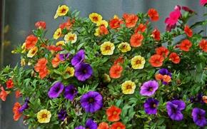 Картинка Обработка, Цветочки, Flowers, Разноцветные, Colors