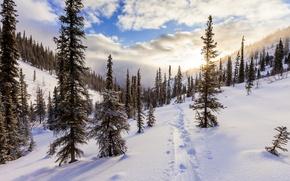 Картинка Закат, Зима, Деревья, Снег, Следы, Пейзаж