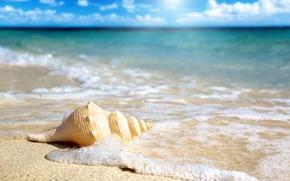 Картинка океан, ракушка, пляж, песок