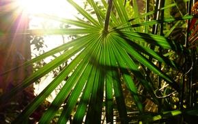 Картинка солнце, пальма, тепло, солнечные лучи, листья пальмы