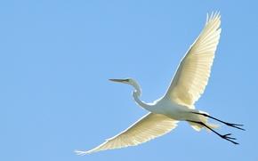 Картинка небо, полет, птица, крылья, клюв, аист, цапля