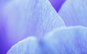 Обои макро, лепестки, голубой, цветок, жилки