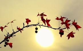 Обои листья, солнце, Ветка