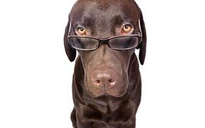 Картинка Щенки, собака, очки