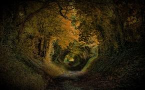 Картинка деревья, парк, Англия, склон, туннель, Соединенное Королевство, Halnaker