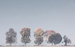 Обои деревья, туман, природа